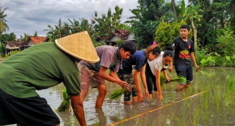 praktek menanam padi